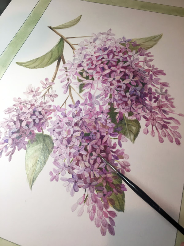 Lilacs by artist Marsha Bowers